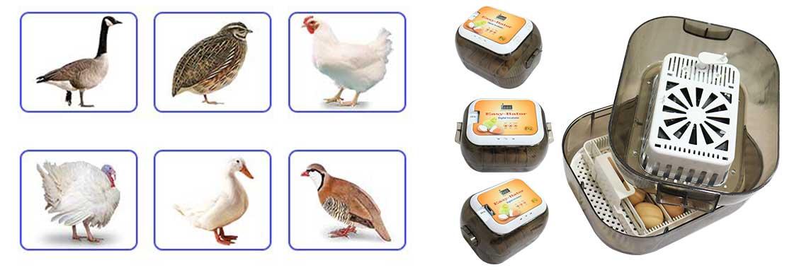 دستگاه جوجه کشی ایزی باتور با امکان جوجه کشی ار پرندگان مختلف