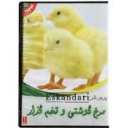 پرورش مرغ گوشتی و تخم گذار