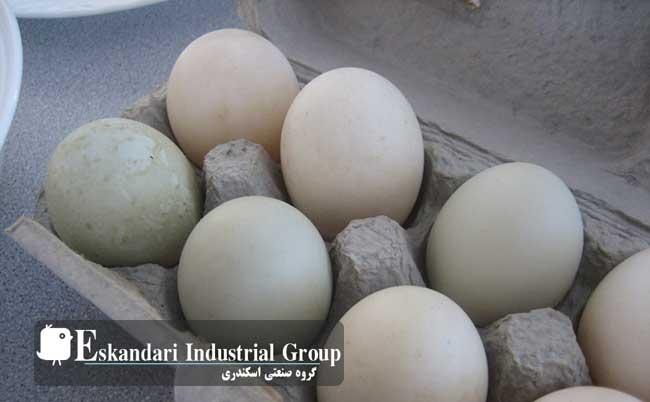 تخم اردک