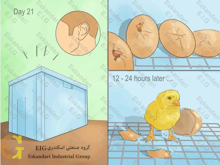 ساخت دستگاه جوجه کشی ساده ی خانگی - مرحله یازدهم