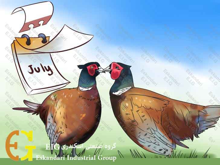 Breed-and-Incubate-Pheasants-Step-1-چگونگی-پرورش-و-جوجه-کشی-قرقاول-