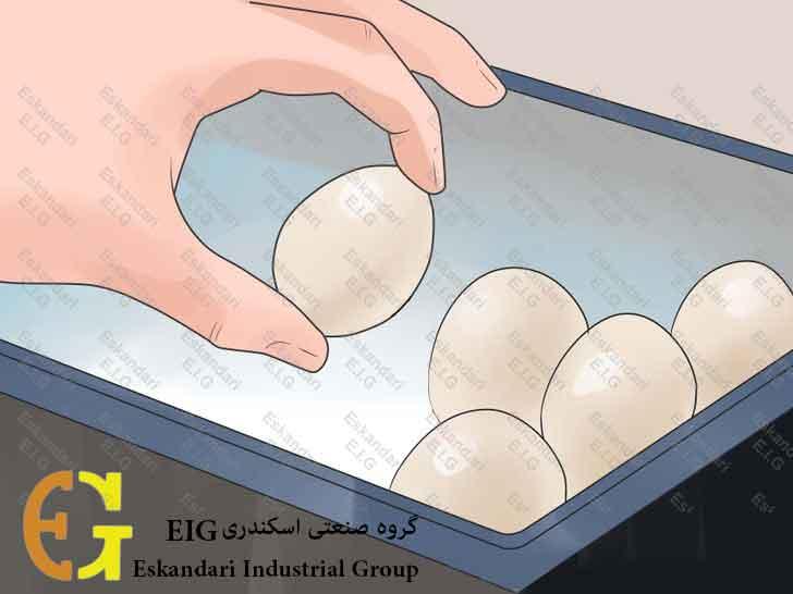 Breed-and-Incubate-Pheasants-Step-10-چگونگی-پرورش-و-جوجه-کشی-قرقاول-