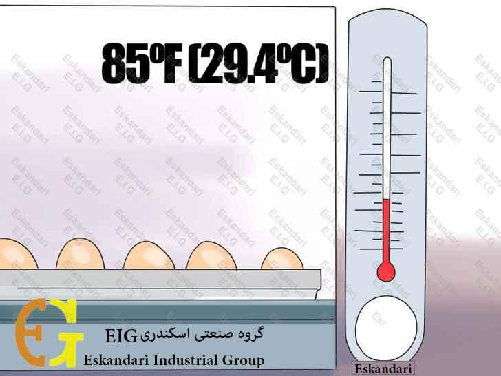 Breed-and-Incubate-Pheasants-Step-14-چگونگی-پرورش-و-جوجه-کشی-قرقاول-