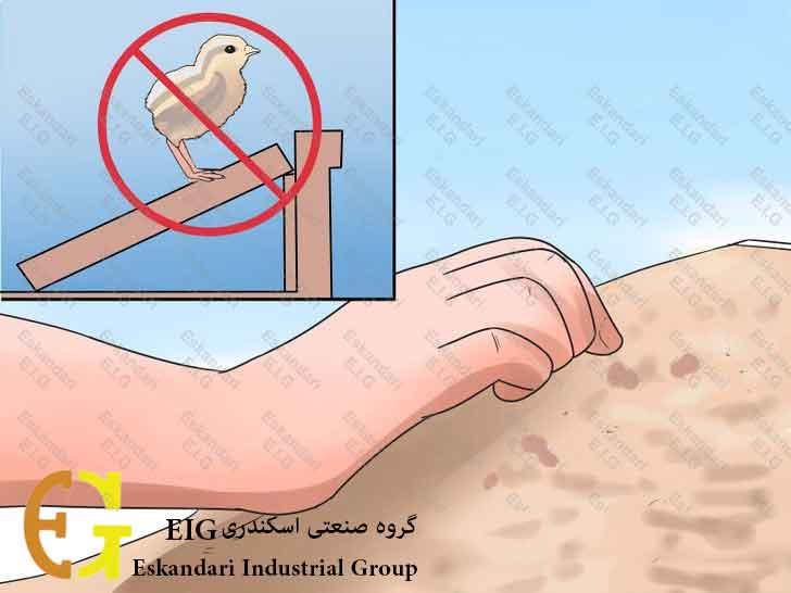 Breed-and-Incubate-Pheasants-Step-21-چگونگی-پرورش-و-جوجه-کشی-قرقاول-