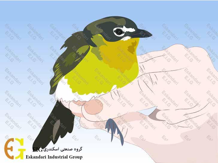 How to Buy a Bird ش- چگونه یک پرنده بخریم 02