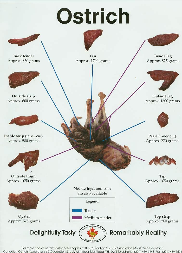 meatchart - جوجه کشی شترمرغ