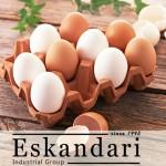 اجزای داخلی تخم مرغ