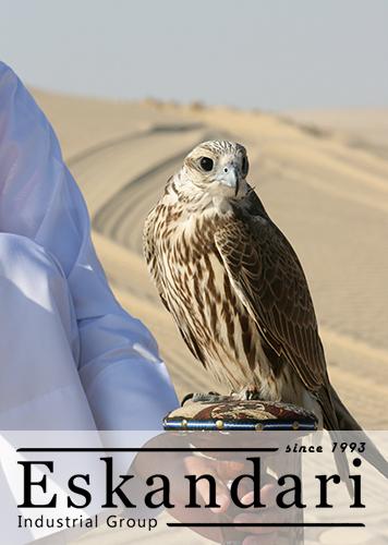قوش - پرندگان شکاری و گونه های آن