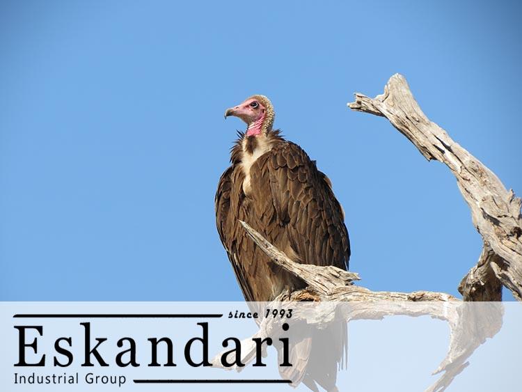 عکس لاشخور - پرندگان شکاری و گونه های آن