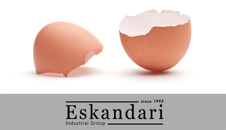 ساختمان و اجزای داخلی تخم مرغ