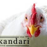 طبقه بندی و اجزای بدن مرغ