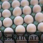 تخم مرغ غیر طبیعی و مراحل رشد جنین