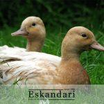 تاسیسات پرورش اردک و غاز
