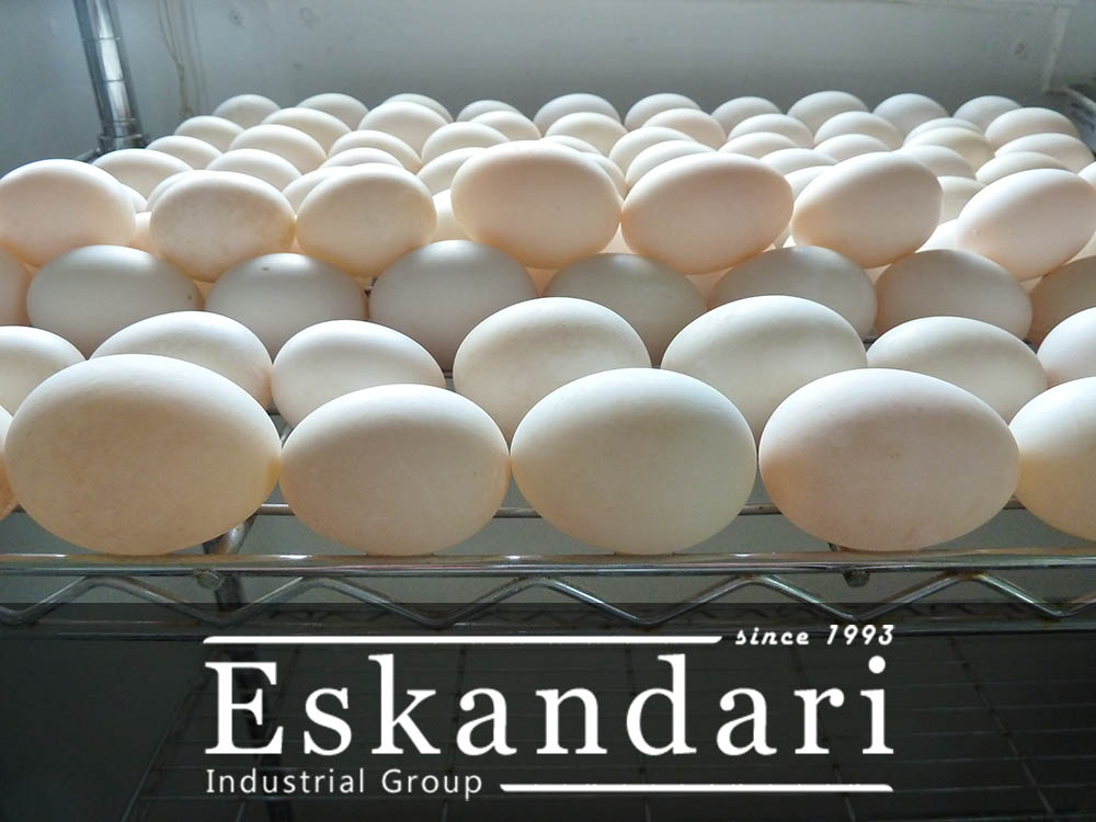 خواص تخم اردک