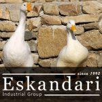 اهمیت پرورش غاز و اردک