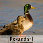 پرورش اردک در محیط های مختلف