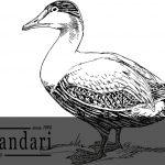 جوجه کشی مصنوعی اردک و غازها