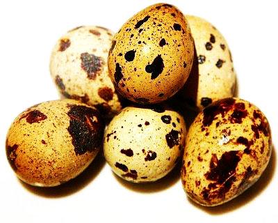 مراقبت از تخم های نطفه دار