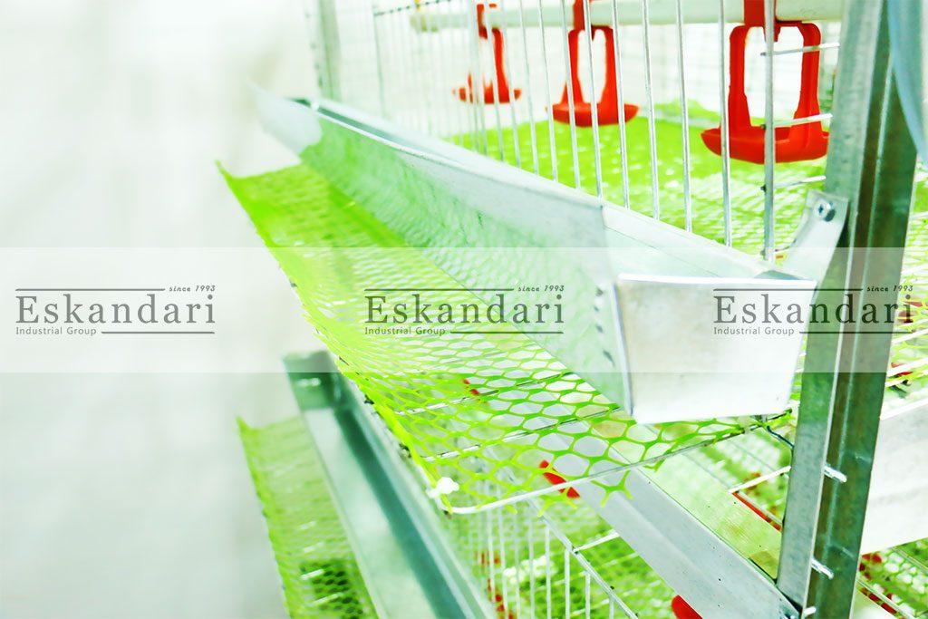 سیستم جمع آوری تخم پرنده به صورت اتوماتیک در قفس دو طرفه بلدرچین